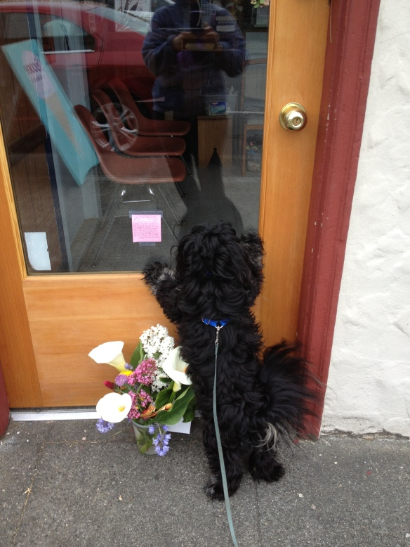 "Every Tuesday Kobe and I used to visit our neighborhood barber, who gave Kobe a ""pupperoni"" treat.  He passed away last week.  We will miss him."